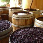世界のワイン産地を知ろう!!:Firadis WINE GLOBE 第2回