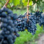 「カベルネ・フラン第2回」 ワインはじめて講座