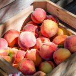 ワインボキャブラ天国【第73回】「桃」 英:peach 仏:peche