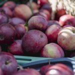 ワインボキャブラ天国【第78回】「プラム」 英:plum 仏:prune