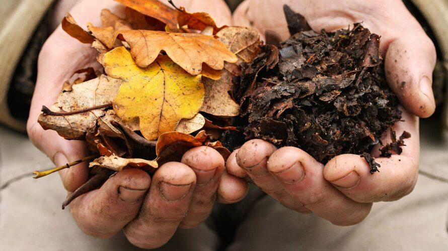 ワインボキャブラ天国【第83回】「腐葉土」英:leaf mold/humus soilなど 仏:terreau/humusなど