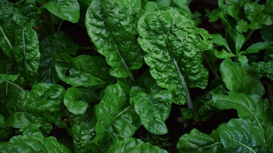 ワインボキャブラ天国【第90回】「ヴェジタルな/植物的な」英:vegetal 仏:vegetal