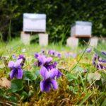 ワインボキャブラ天国【第92回】「スミレの花」英:violet 仏:violette