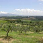 イタリア出張報告① ~ブルネッロ・ディ・モンタルチーノを4つのエリアに分けてみると (営業 青山 マルコ)