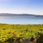 """スペイン出張報告 ~スペイン最大級のワインフェア""""Fenavin""""で、リアス・バイシャスの白ワインを探してきました (営業 寺坂 和也)"""