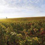 ブルゴーニュを脅かす、ブドウ畑価格の高騰(代表取締役社長 石田大八朗)